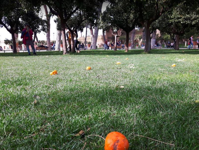 Апельсиновые сады в Риме - экскурсия неизведанный Рим